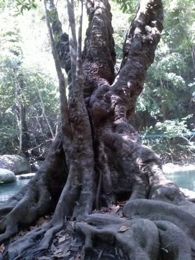 albero erawan falls