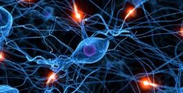 Le lamentele e le chiacchiere superflue danneggiano i neuroni